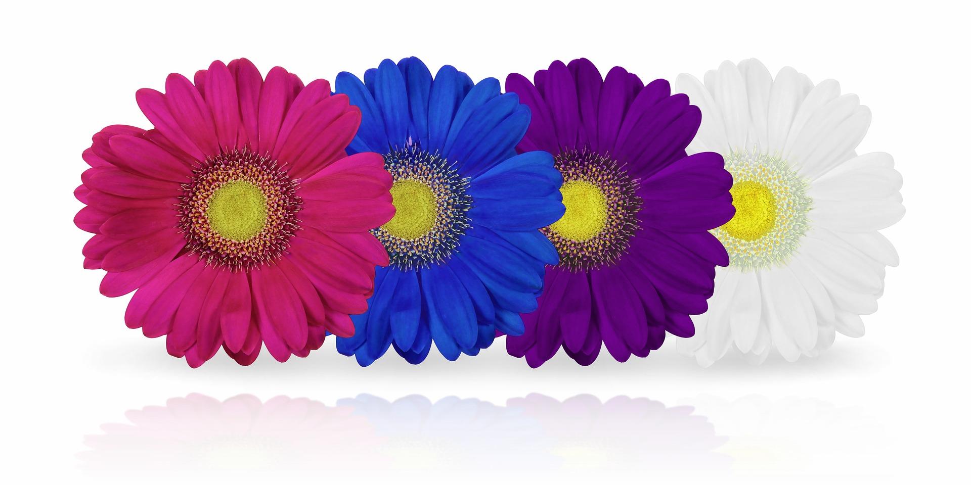 mundo-maxico-fiestas-infantiles-hinchables-arousa-flores